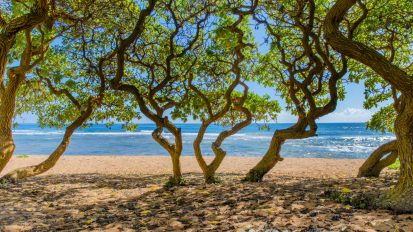 Aliomanu Beach Front